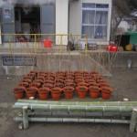 20120312桜の苗木の献木